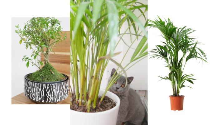 Plantitems.jpg